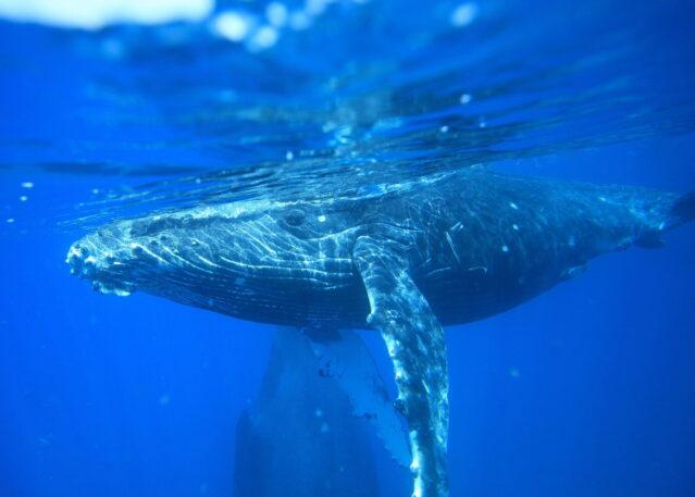 ACTIVE - RFF Whales1